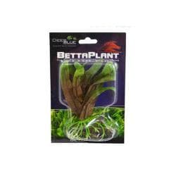 Betta Plant Small Cryptocoryne