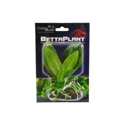 Betta Plant Small Pond Vine
