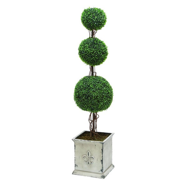 Topiary Boxwood with Triple Ball Shaped
