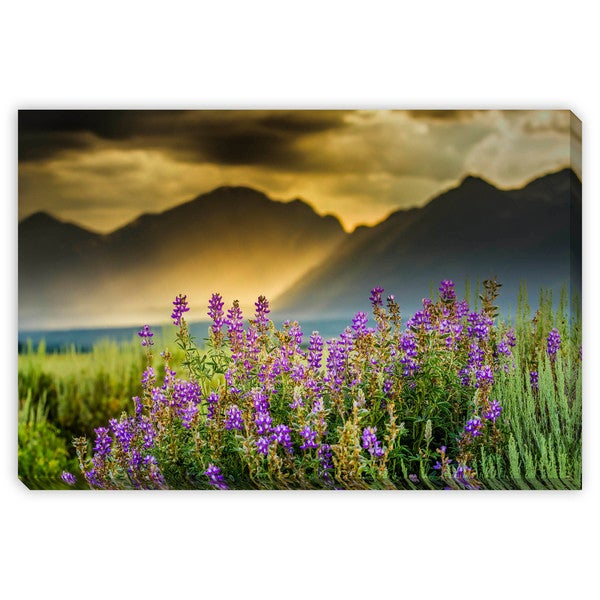 Dfikar's 'Purple Lupines in the Tetons' Canvas Gallery Wrap