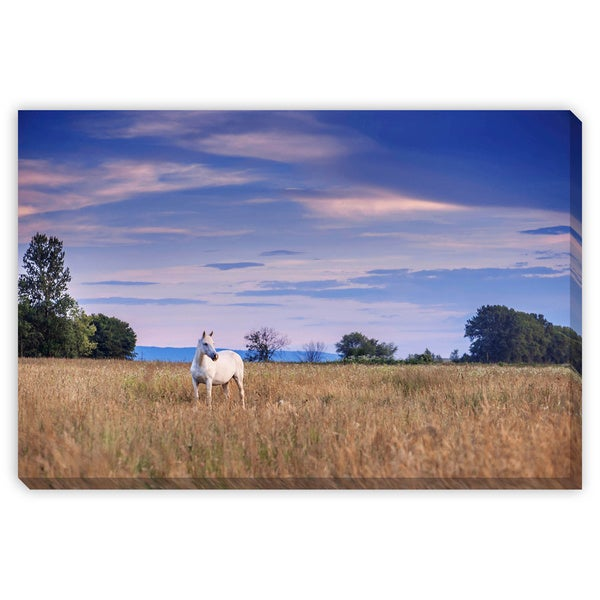 Ivan Kmit 'White Horse Blue Sky' Gallery Wrapped Canvas Art