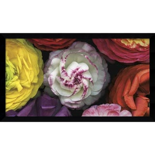 Pip Bloomfield 'Assorted Ranuncula' Framed Art Print 46 x 27-inch