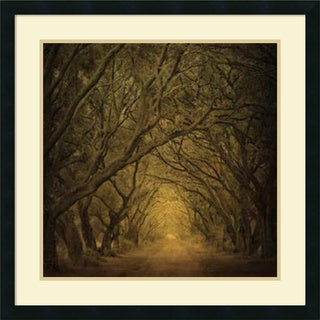 William Guion 'Evergreen Oak Alley' Framed Art Print 27 x 27-inch