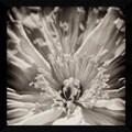 Jennifer Broussard 'Inner Beauty' Framed Art Print 32 x 32-inch