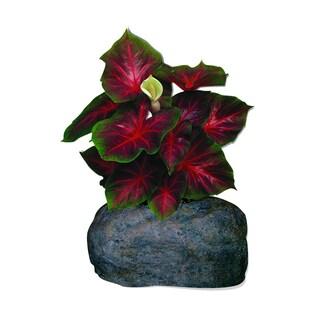 Caladium Red Small Flowerock