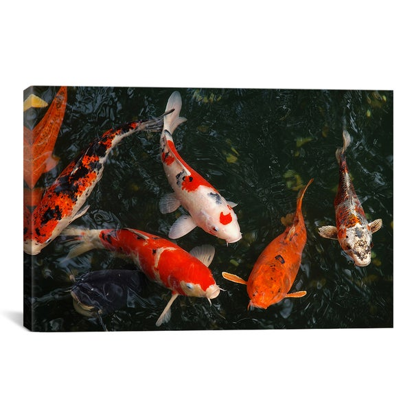 Koi Carp In Japan by Unknown Artist Canvas Print Wall Art