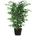 Christopher Knight Home 4-foot Variegated Ficus Bush