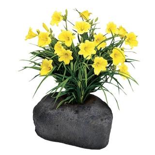 Daylily Yellow Medium Flower Rock