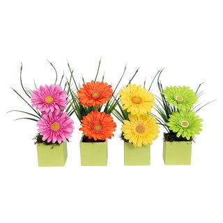 Christopher Knight Home Gerbera Daisy in Lime Cube Asst X 4