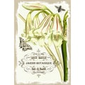 Yosemite Home Decor 'Amaryllis Belladonna and Bee' Cotton Canvas