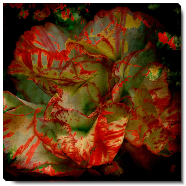 Studio Works Modern 'Deep Red Carnation' Fine Art Gallery Wrapped Canvas