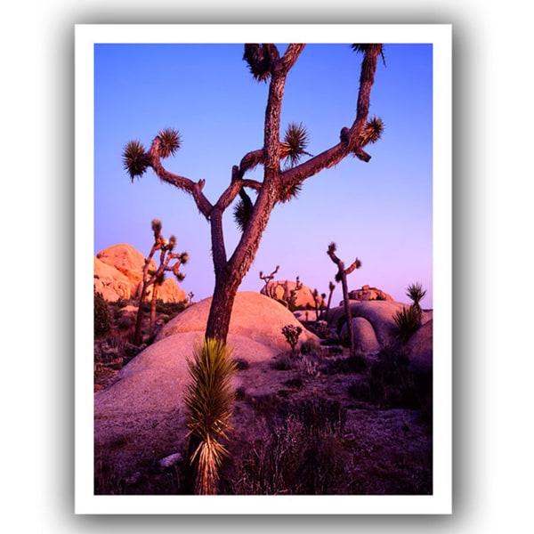 Dean Uhlinger 'Joshua Tree Twilight' Unwrapped Canvas
