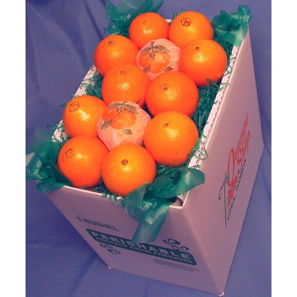Fresh Florida Navel Oranges 18-pound Fresh Fruit Box