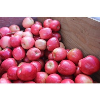 Washington Gala/ Fuji Fresh Mix and Match Apple Assortment (7.5 or 15 Pounds)