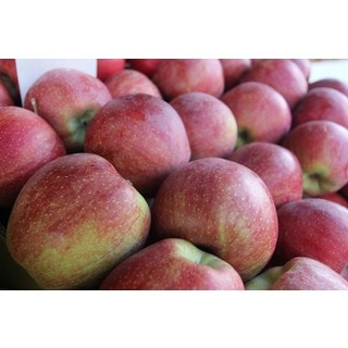 Washington Honeycrisp Mix and Match Apples (7.5 or 15 Pounds)