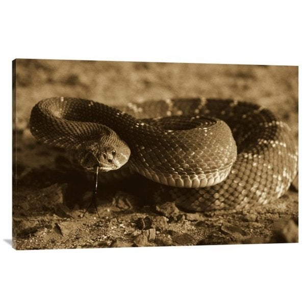 Larry Minden 'Red Rattlesnake, Baja California, Mexio' Stretched Canvas Art