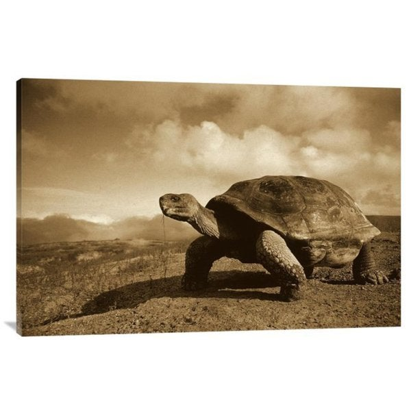 Tui De Roy 'Galapagos Giant Tortoise on Caldera Rim, Alcedo Volcano, Galapagos Islands' Stretched Canvas Art
