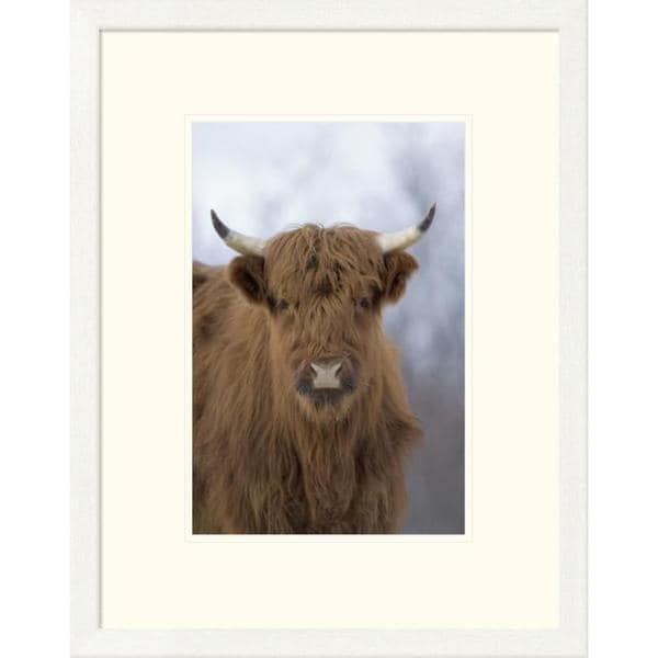 Michael Quinton 'Cattle, a highland breed, Kodiak Island, Alaska' Framed Art Print