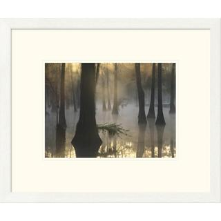 Tim Fitzharris 'Bald Cypress grove in freshwater swamp at dawn, Lake Fausse Pointe, Louisiana' Framed Art Print