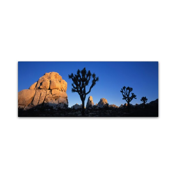David Evans 'First Light-Joshua Tree NP'