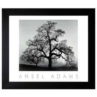 Adams, Ansel 'Oak Tree, Sunset City, California' Framed Artwork