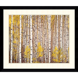 Christopher Burkett 'Aspen Grove, Colorado' Framed Art Print 39 x 33-inch