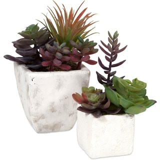 Wolek Potted Succulents (Set of 2)