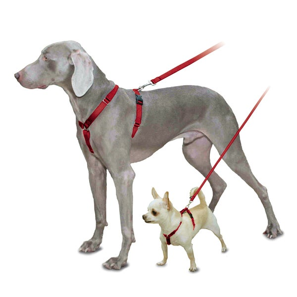 Pet Safe Red Sure-Fit Pet Harness