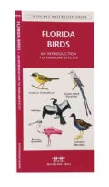 Florida Birds: A Folding Pocket Guide to Familiar Species (Paperback)