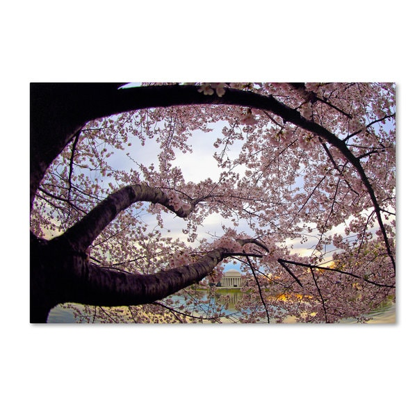 CATeyes 'Cherry Blossoms 2014-1' Canvas Art