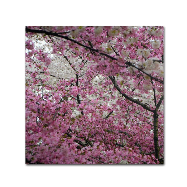 CATeyes 'Cherry Blossoms 2014-3' Canvas Art