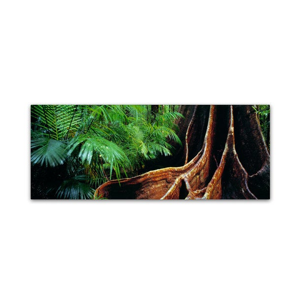 David Evans 'Rainforest Fig-Qld' Canvas Art