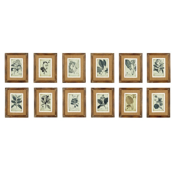 Sage & Co Assorted Wood Framed Botanical Illustrations (Pack of 12)