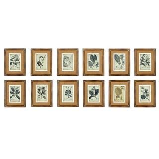Assorted Wood Framed Botanical Illustrations (Pack of 12)
