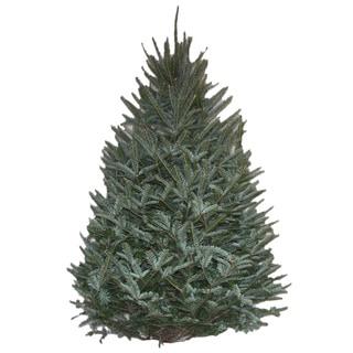 Real Fresh Cut Natural Fraser Fir 6-7 Foot Christmas Tree