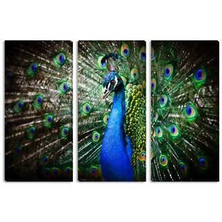 Peacock Triptych Art