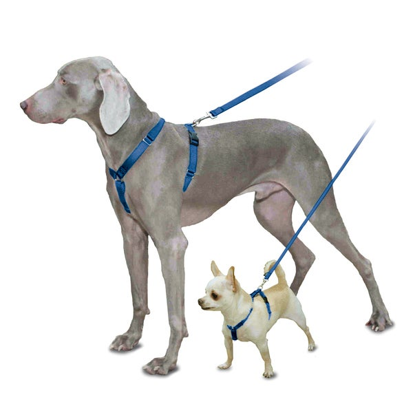 Pet Safe Sure-Fit Blue Harness