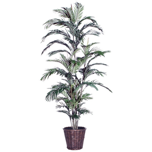 6-foot Areca Palm Extra Full