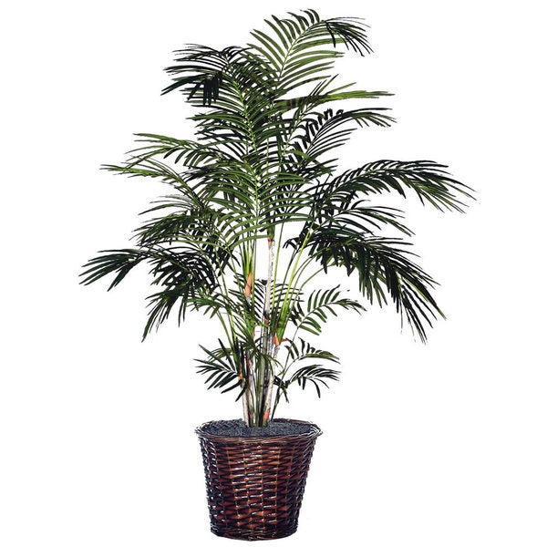 6-foot Extra Full Tropical Palm