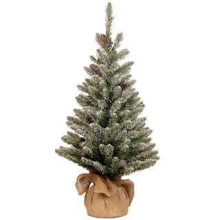 3-foot Snowy Concolor Fir Tree