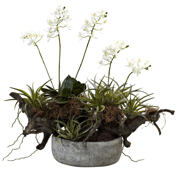 Orchid and Succulent Garden with Decorative Vase