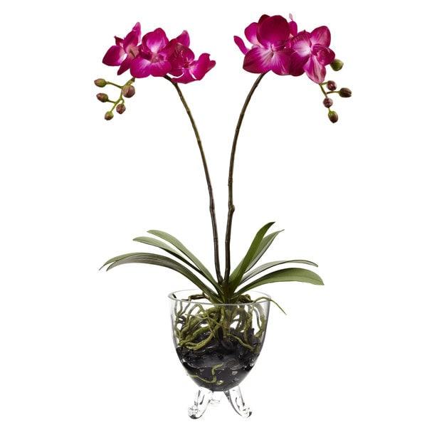 Double Phalaenopsis Elegance Arrangement 14311502
