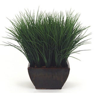 Grassy Field Plant Arrangement