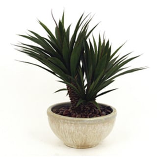 Succlents Oasis Decorative Plant (Set of 10)