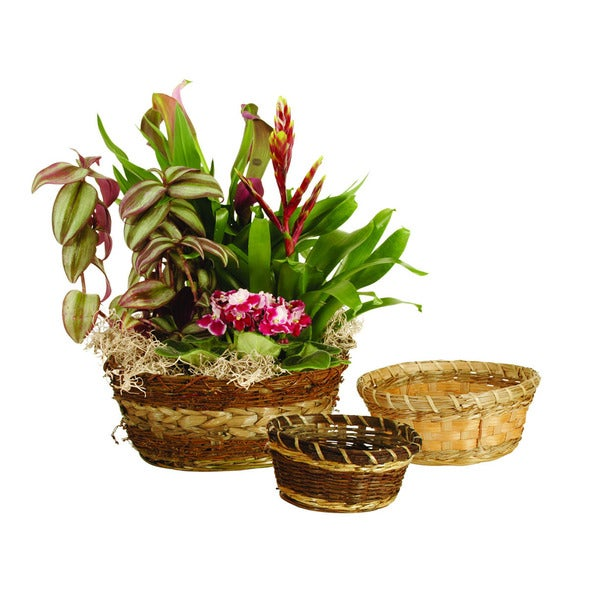 Assorted Bowls (Set of 3)