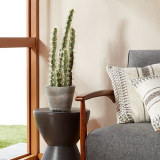 Decorative Cactus Garden with Cement Planter