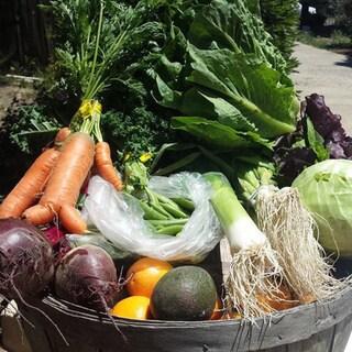 Blosser Urban Garden Certified Organic Fresh Mix Produce Bundle (Local Delivery)