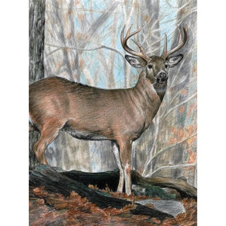 """Color Pencil By Number Kit 8.75""""X11.75""""-Whitetail Buck"""