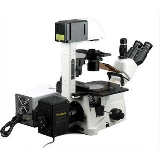 AmScope 40X-900X Phase Fluorescence Inverted Microscope with 5MP CCD Fluo Camera
