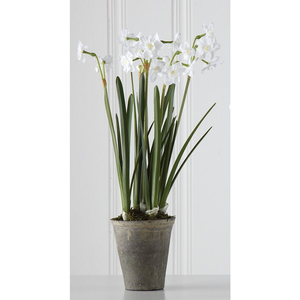 Sage & Co 20-inch Potted Paper White In 5-inch Pot (Pack of 4)